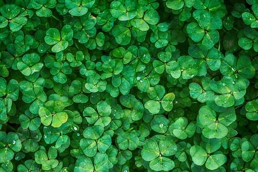 clover-1225988__340