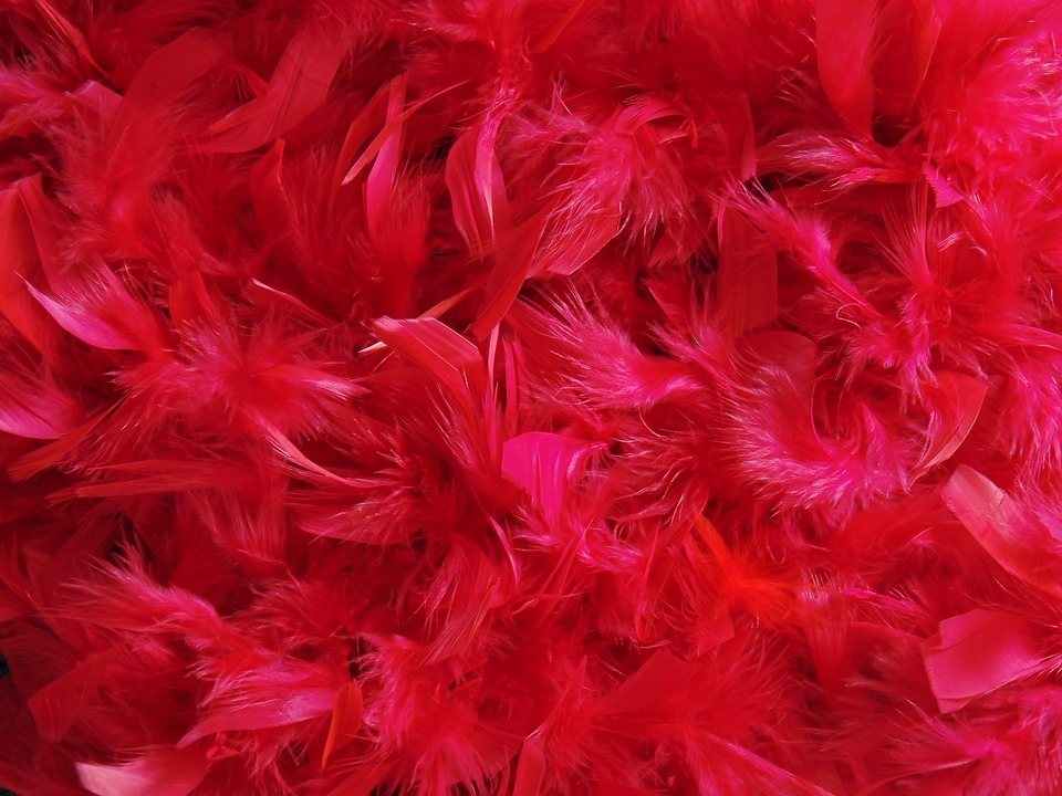 feathers-2761235_960_720
