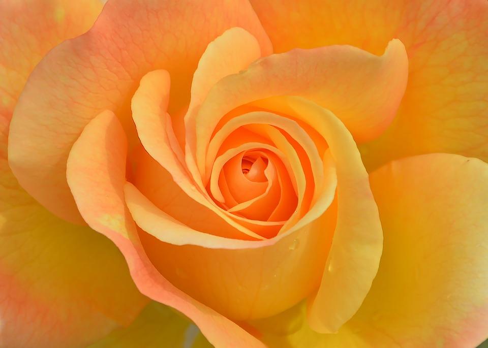 flower-3063414_960_720